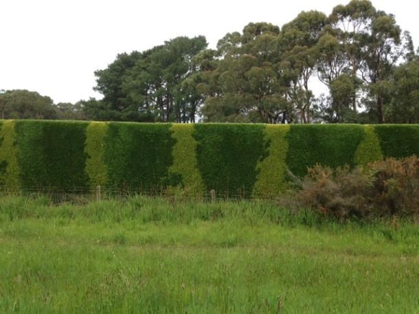23 hedge